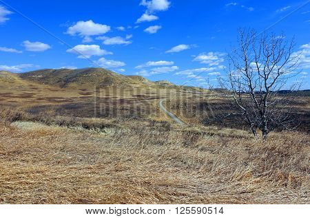 Picture of the landscape in May at Glenbow Provincial Park,Alberta,Canada.