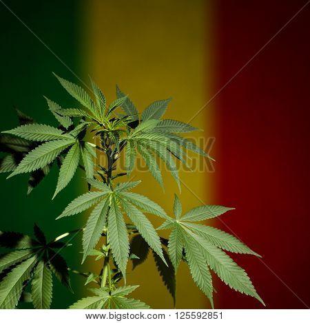 Cannabis with rastafarian flag background. Dark scene with deep shadows.