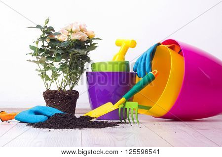 Gardening Tools And Plant On The Floor