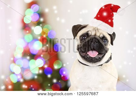Funny dog with Santa hat near Christmas tree