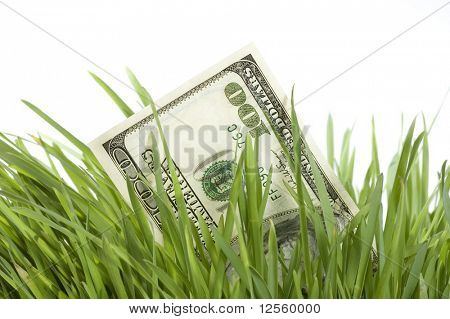 Money Growth.One Hundred dollar bill growing in the green grass. Isolated on a white background. Close-up image.