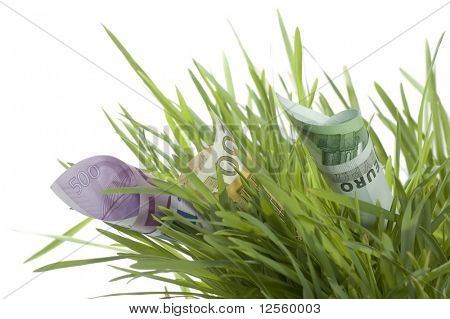 Euro growth.100/200/500 European Currency banknotes growing in the green grass. Isolated on a white background. Close-up image.