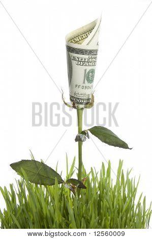 Crecimiento de dinero se levantó. Imagen conceptual.