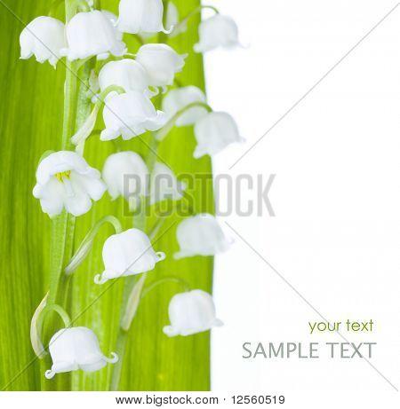 Lirio de los valles aislado en blanco con texto de muestra.