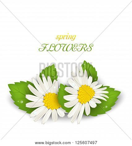 Illustration Camomile Flowers with Shadows on White Background. Spring Flowers - Vector