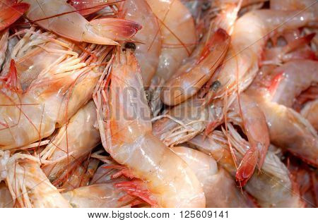 raw shrimp with head, ready to cook