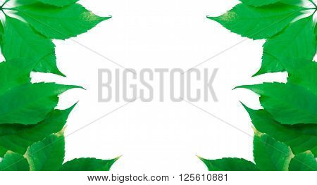 Green Leaves Background With Copy Space