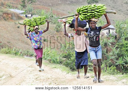 FOND BAPTISTE - FEBRUARY 18, 2016:  Four Haitian women carrying large loads of bananas on their heads.  They're climbing uphill as they're going home from market.