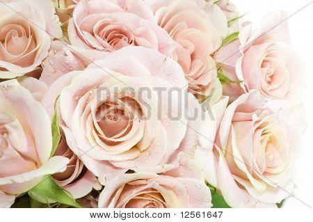 Fresh Roses Background