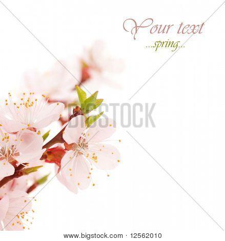 Frontera de hermosas flores