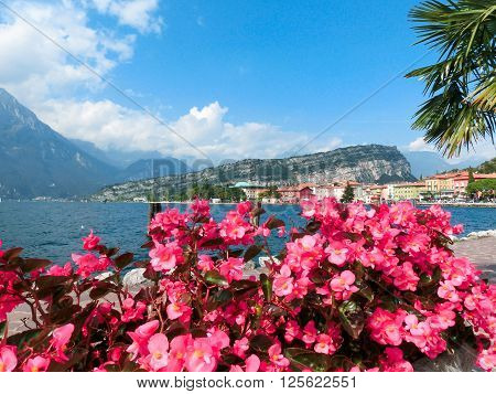 The Torbole on Lake Garda in Italy. View through  pink flowers