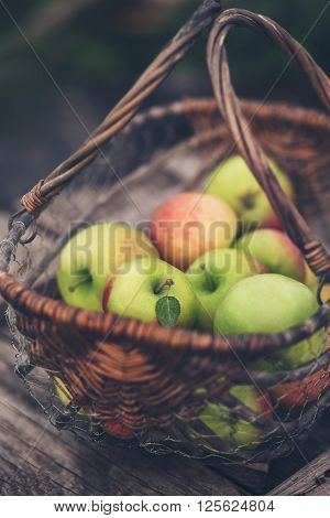Organic apples in a basket. Healthy eating.