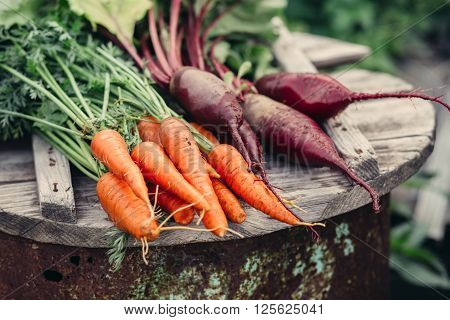 Fresh vegetables carrots and beets. Without Genetically modified food. Healthy food.