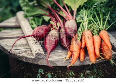 Fresh vegetables carrots and beets. Healthy eating.