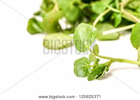 freshly picked organic watercress isolated on white