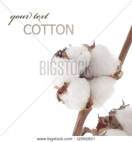 Cotton over white