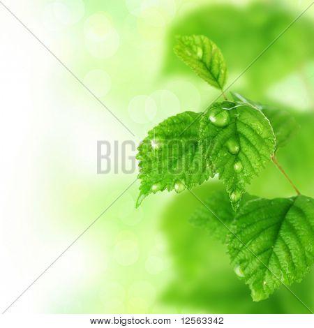 Schöne Frische Blätter mit Wassertropfen