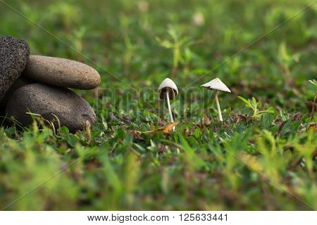 A mushroom (or toadstool) is the fleshy, spore-bearing fruiting body of a fungus