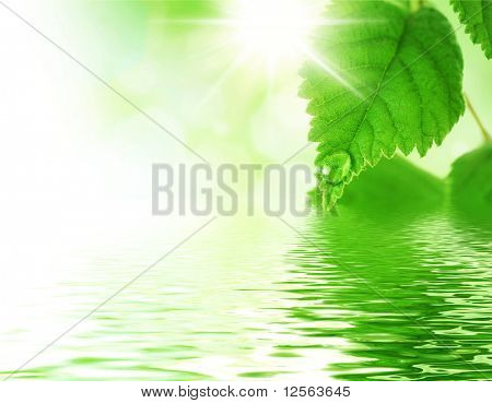Beautiful Fresh Leaves with Water drop