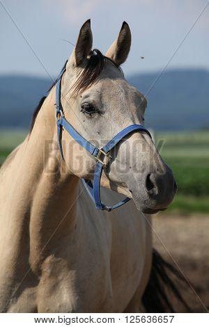 Portrait Of Beautiful Horse With Interesting Color