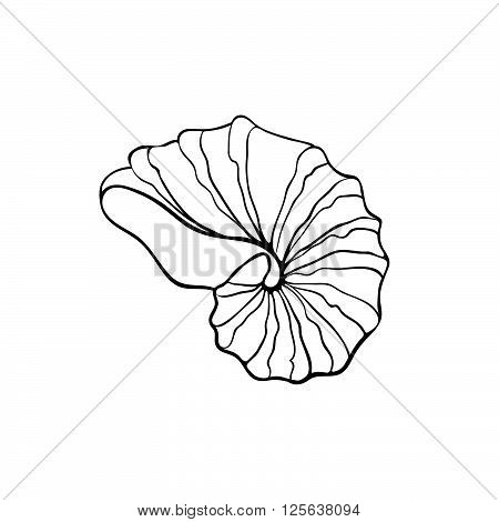 Hand drawn sea shell. Nautilus shell outline. Seashell icon in black isolated on white background.