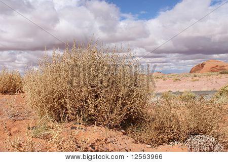 Tumble weeds in Arizona