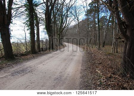 Winding gravel road at spring in a rural landscape