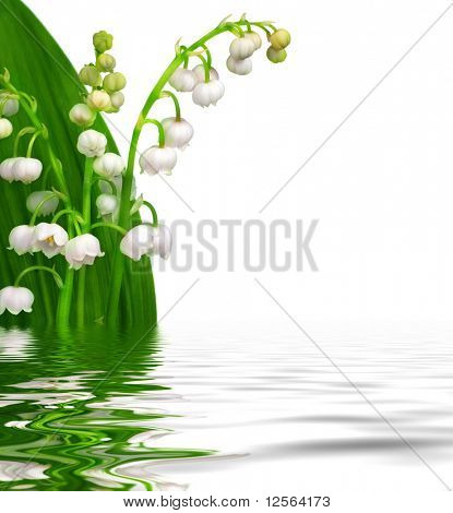 Fresh Lily-of-the-valley