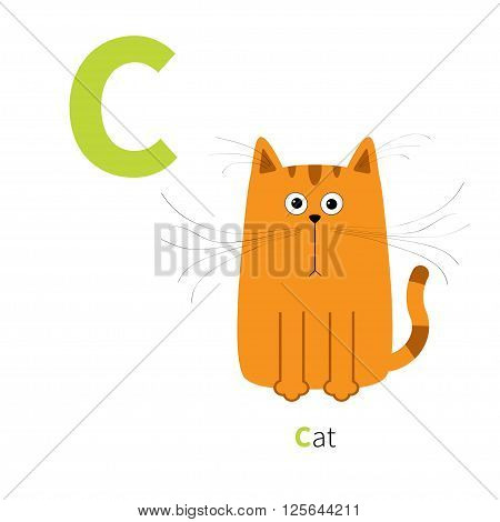 Letter C Cat orange English abc with animals. Zoo alphabet. Education cards for kids Isolated White background Flat design Vector illustration