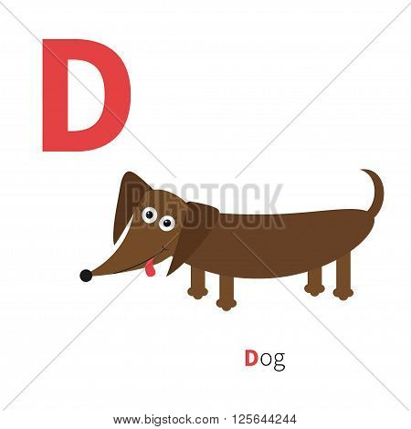 Letter D Dachshund Dog Zoo alphabet. English abc with animals Education cards for kids Isolated White background Flat design Vector illustration