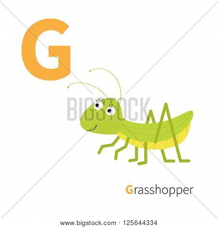 Letter G Grosshopper Zoo alphabet. Insect. English abc with animals Education cards for kids Isolated White background Flat design Vector illustration