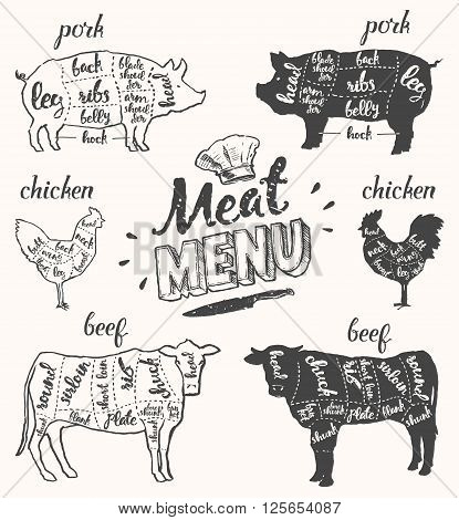 Vintage restaurant meat menu template. American scheme of pork cuts, chicken cuts and beef cuts, hand drawn vector illustration.