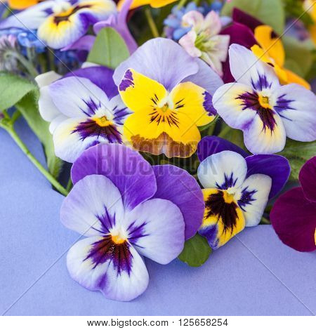 Little bouquet of spring flowers on purple paper