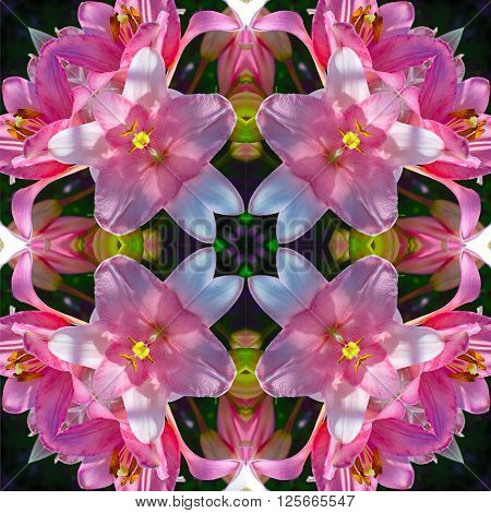 the pattern of flowers pink-white Lily imitating kaleidoscopic pattern.