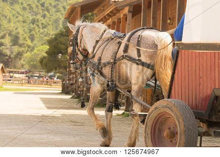 Walk with a horse coach at a ranch.