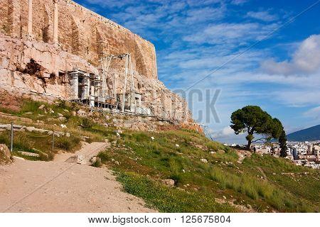 Tree Under Acropolis