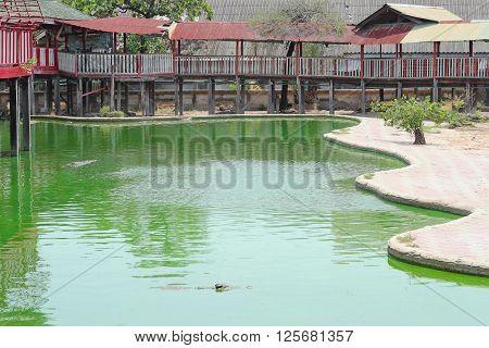 Pond On The Farm For Crocodiles
