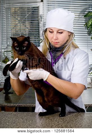 Veterinarian Doctor And A Cat