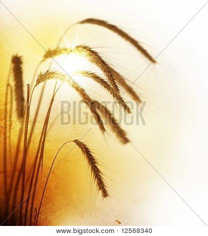 Wheat.Vintage estilo