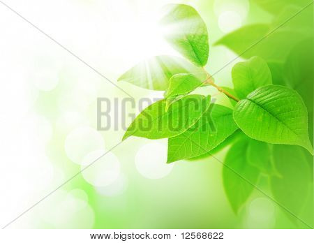 Spring Green Leaves border