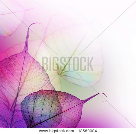 Floral Design.Leaves