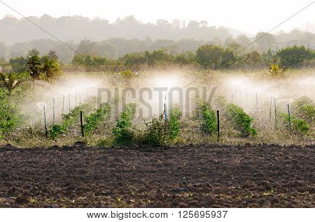 Garden sprinkler the morning summer day during watering the green crops