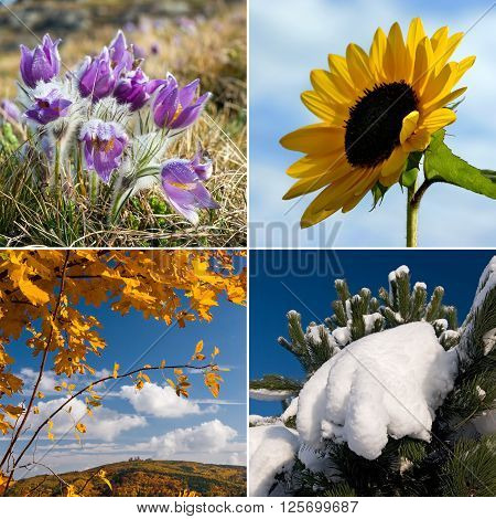Four season nature collage in squares - all used photos belong to me