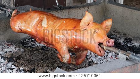 Roasted pig on traditional philippines barbeque banquet