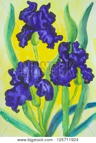Watercolor painting three blue irises on yellow background.