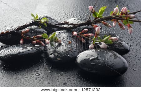 Wet Zen Spa Stones and spring blossom