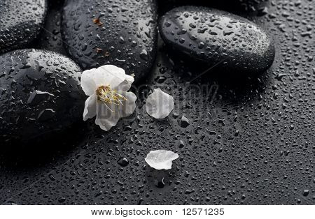 Wet Zen Spa Stones and spring flower