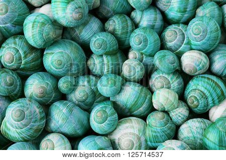 Many colorful cyan snail shells, nature background
