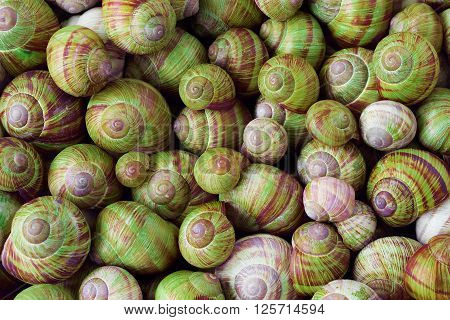 Many red and green snail shells, nature background