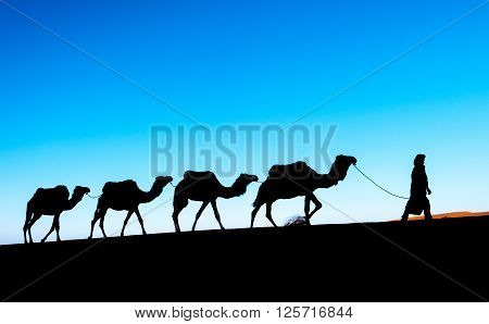 Camel caravan on the Sahara desert. Morocco, Africa